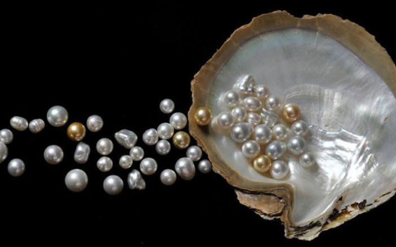 All You Need To Know About Pearl Jewelry